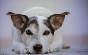 Famous Indian Dog Names