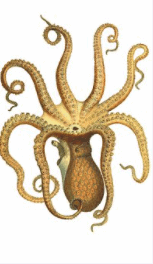 Cool Octopus Names