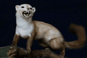 Funny Weasel Names