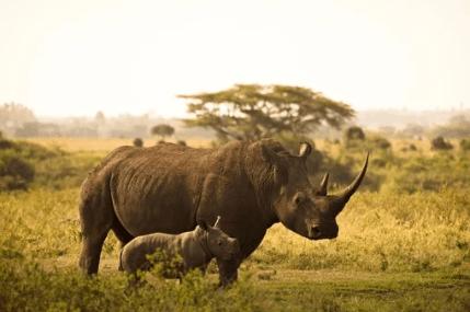 Famous rhino names